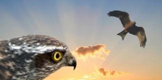 Totemske živali, živali moči in njihova vloga