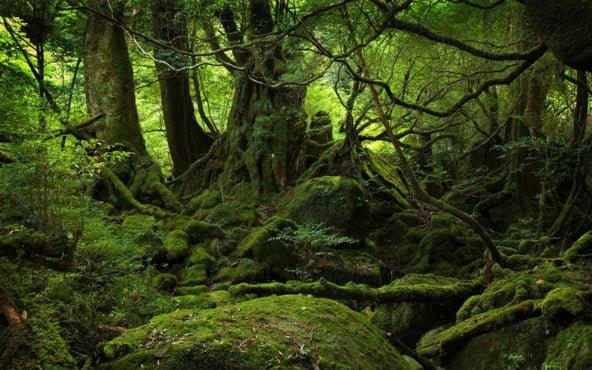 Nara clanek domorodci m