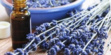 pure organic lavender essential oil m