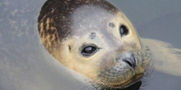 Pomor tjulnjev Paul Martin Eldridge m