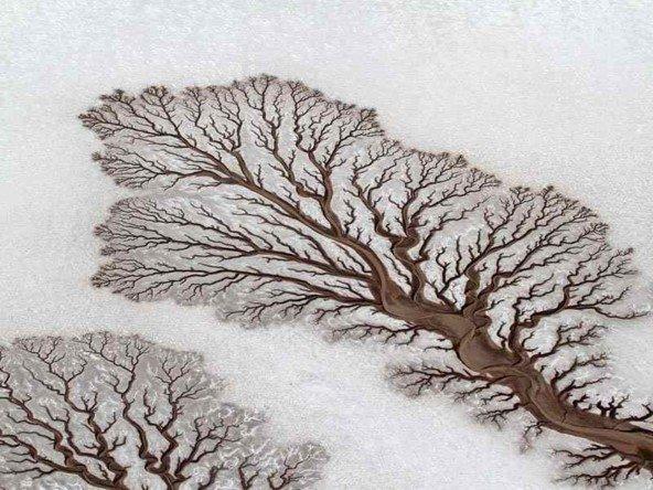 drevo m