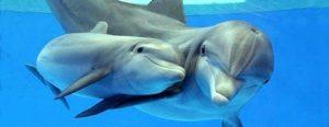 slika 3 (delfini)