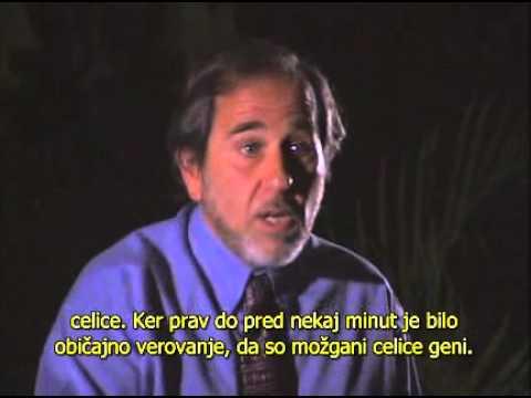 Biologija zaznave-Dr. Bruce Lipton