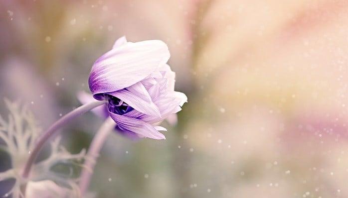 Hvaležnost odpira srce, odpuščanje ga umije in ljubeča beseda ga preobrazi