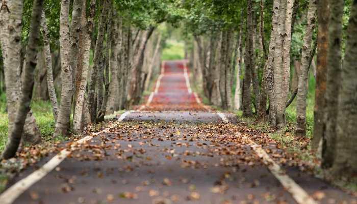 srednja pot