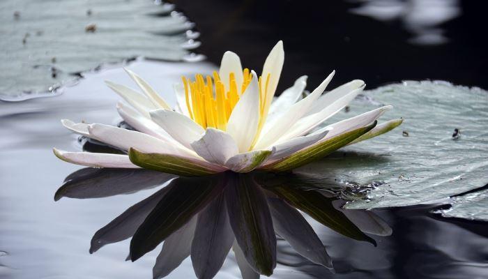 kako doseci mir v srcu