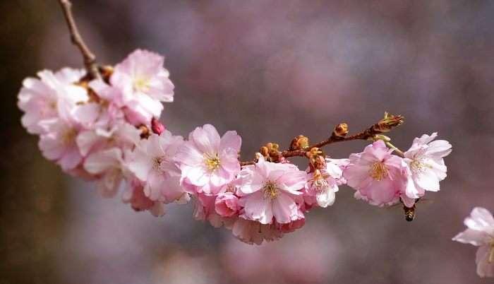 Duhovno presvetljeni razum je pot miru in blagostanja 2