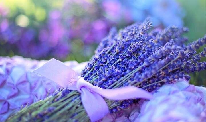 Aromaterapija zdravi dušo in telo 1