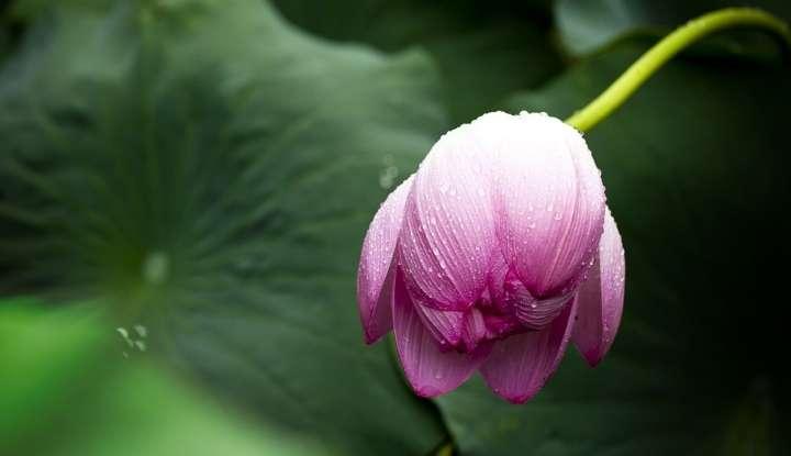 Sočutje z modrostjo 9