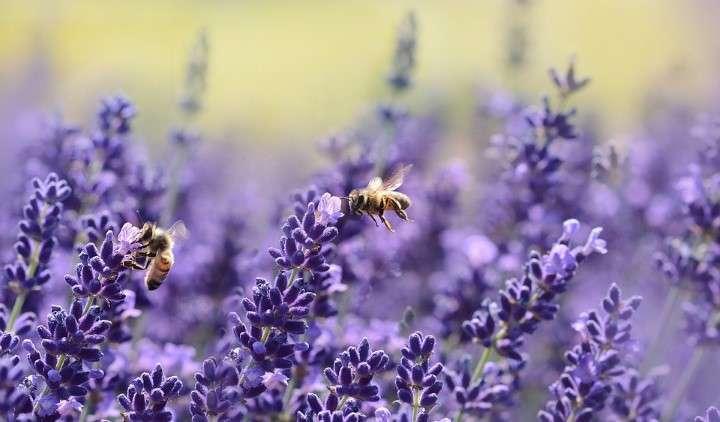 Če ne bo čebel, ne bo hrane in tudi vsega drugega ne 1