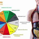 Biološka ura notranjih organov