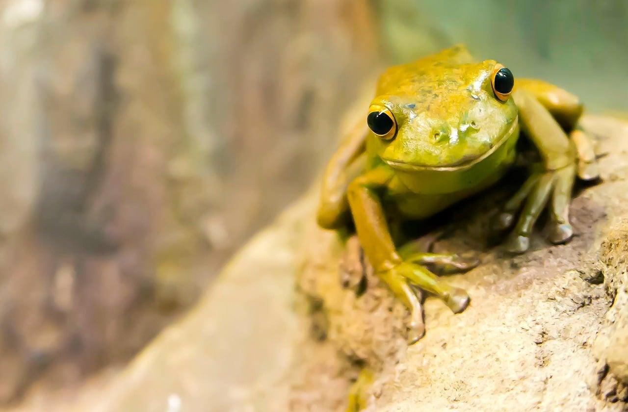 Živalski vodnik žaba 3