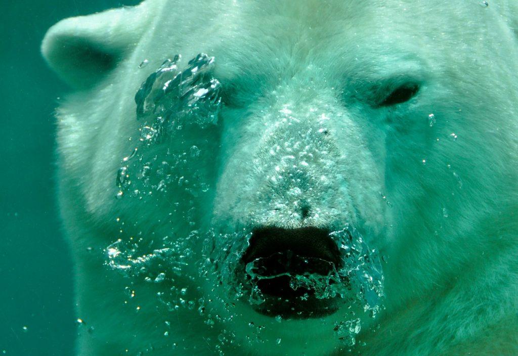 Živalski vodnik medved-šamanizem 5
