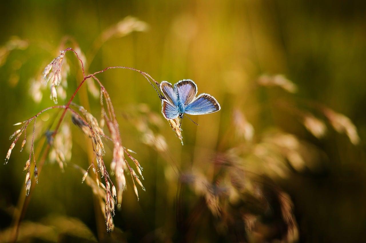 Živalski vodnik metulj 8