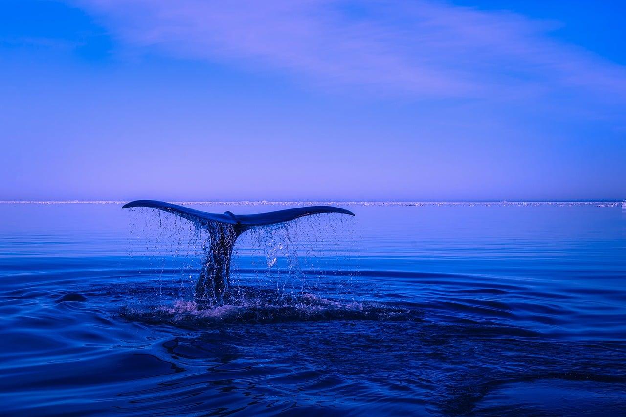 Živalski vodnik kit 4