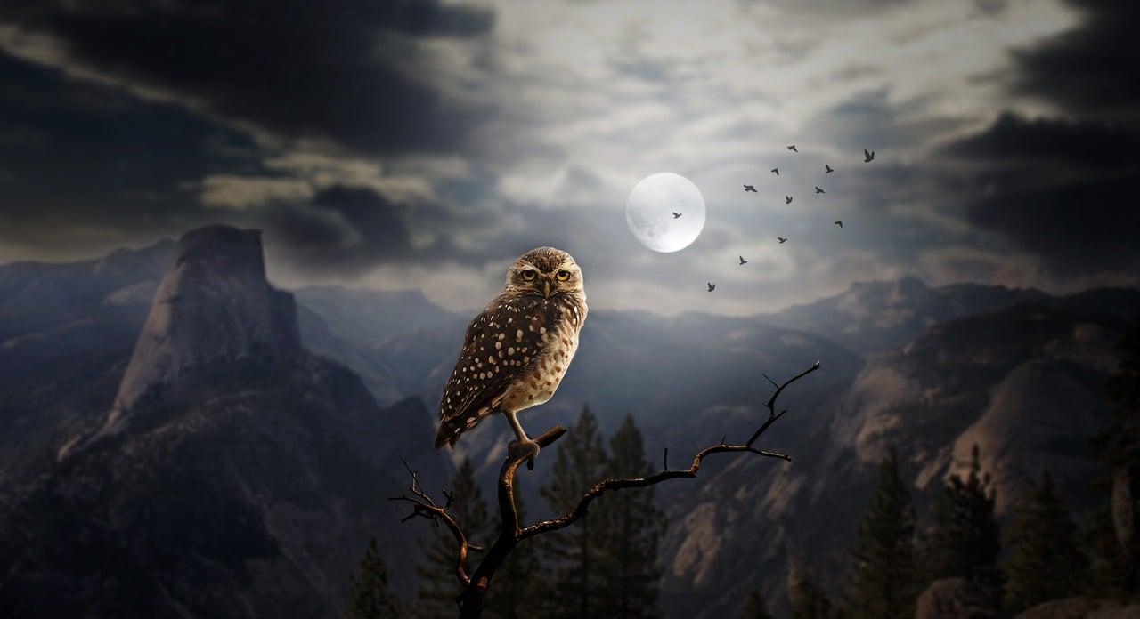 Današnja Nova luna, 5.4. odpira pot do uspeha, zato manifestirajte 13