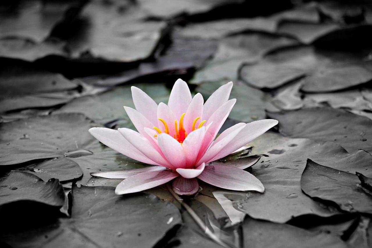 Sprostitev pred meditacijo 2