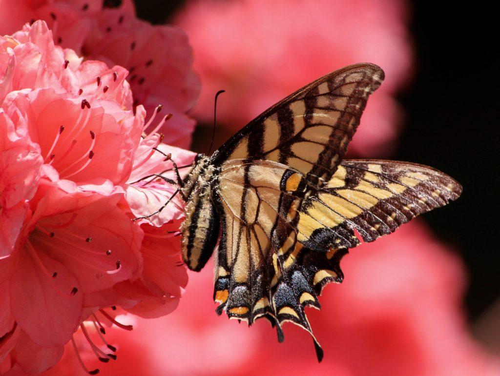 butterfly-108616