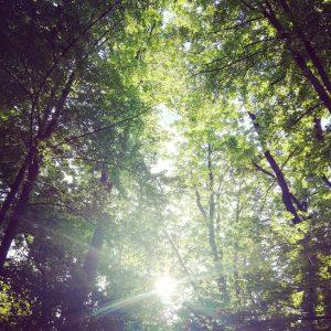 Kaj je gozdna meditacija