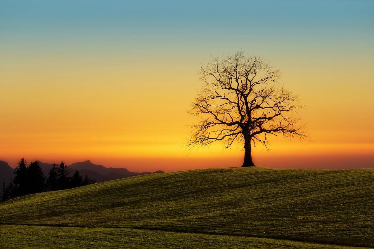 Drevesni objem 2