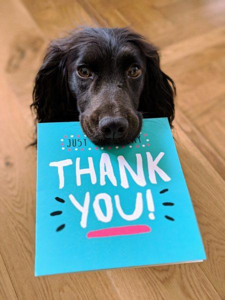 Alkimija hvaležnosti - poznate moč zavestne hvaležnosti? 1