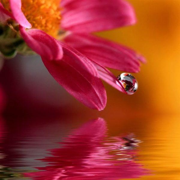 Flower_iPad_Air_Wallpapers_HD_81_640