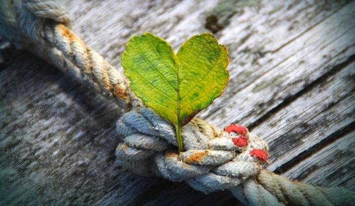 Jay Shetty: Hvaležnost je najmočnejša droga na svetu 2