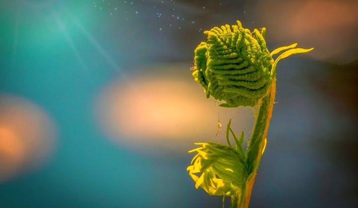 Ali veste, da imajo rastline skrivnostne in čarovne moči? 5