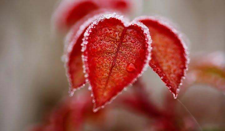 Ljubezen onstran groba