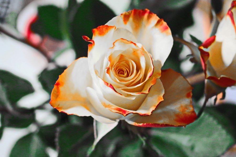 pexels-pixabay-60909-12b4ece9