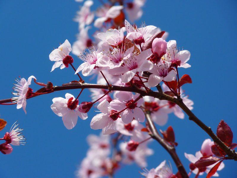 tree-5378_1920-1636b0a6